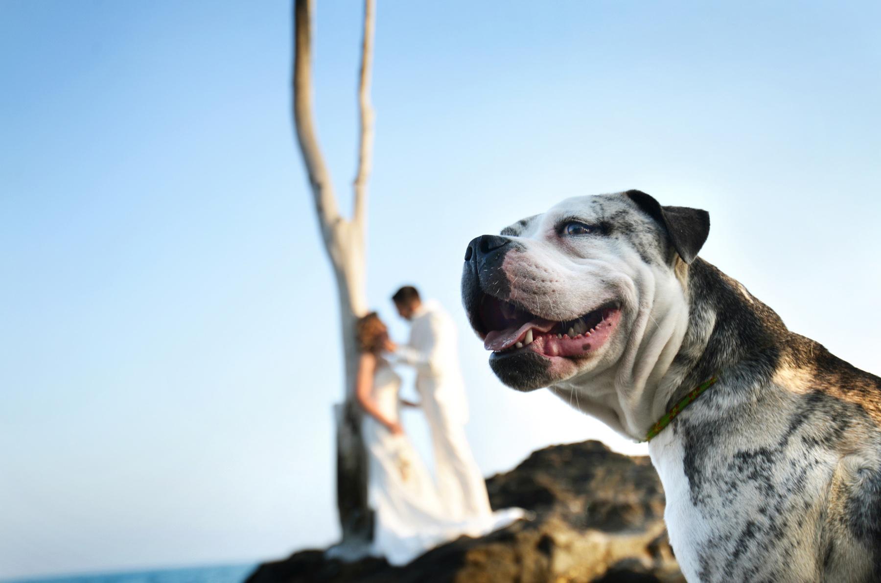 la viborilla benalmadena fotografia de boda