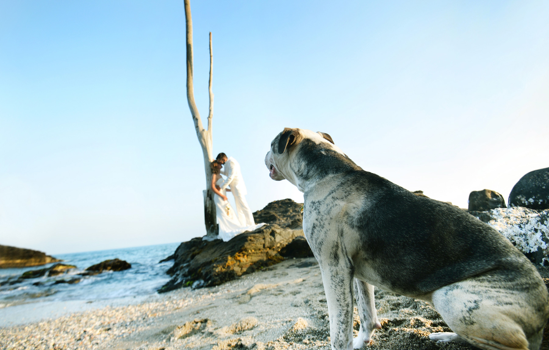 Boda en la playa – La viborilla