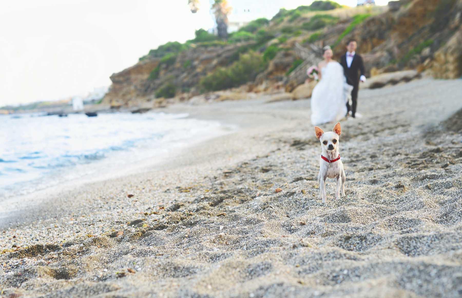 bodas en playa fotografos estepona